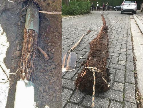 rootcutting2