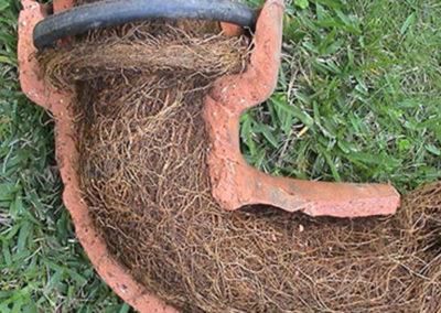 rootcutting1